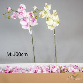 Orchidea ág
