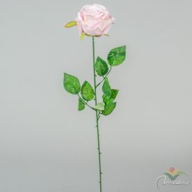 Rózsa szálas M60cm 24db/#