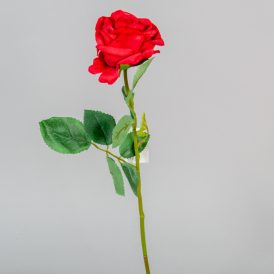 Rózsa szálas M49cm 48db/#