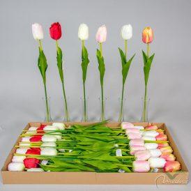 Tulipán szálas M60cm 48db/#