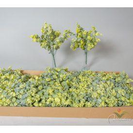 Eukaliptusz bokor 7 ágú 24db/karton Egész/fél kartonra rendelhető!