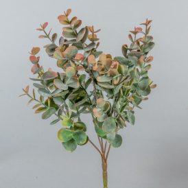 Eukaliptusz bokor 5 ágú M34cm 36db/#