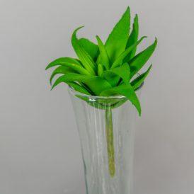 Aloe vera M8cm 12db/csom