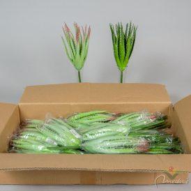 Aloe vera 24db/karton Egész/fél kartonra rendelhető!
