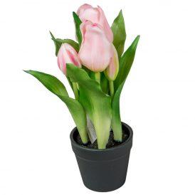 Cserepes tulipán 12db/karton Egész/fél kartonra rendelhető!
