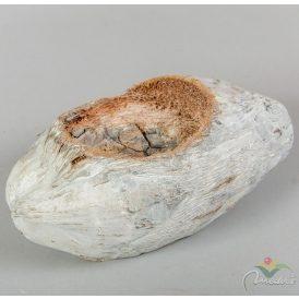 Egész kókusz kaspó mosott fehér 10cm