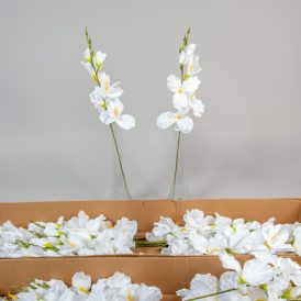 Kardvirág szálas pure white M55cm 56db/#