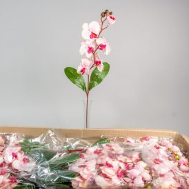 Orchidea szálas M75cm pink/cream 144db/#