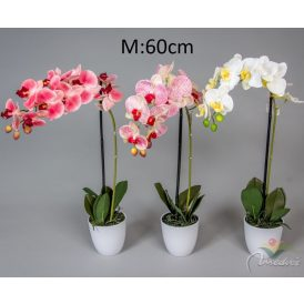 Orchidea bokor cserepes fehér