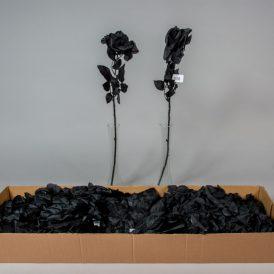 Szálas rózsa fekete 36db/karton Egész/fél kartonra rendelhető!