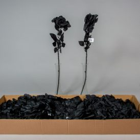 Rózsa szálas fekete M65cm 36db/#