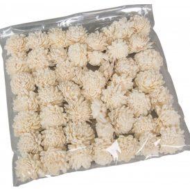 Ming zinnia 4cm 50db-os