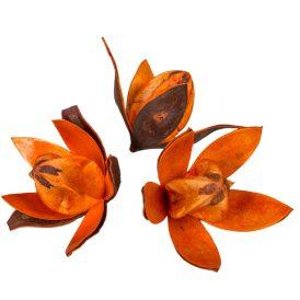 Wild lili szárított narancs 14db/csom