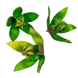 Wild lili szárított zöld 14db/csom