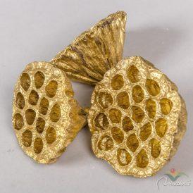 Lótusz szárított 8-10cm arany 10 db-os