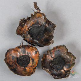 Kókusz virág szárított fekete 32dkg/csom