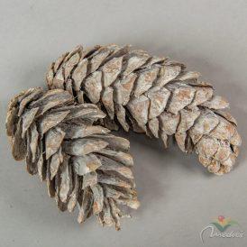 Strobus toboz havas fehér 10-18cm  9 db-os