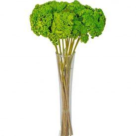 Achillea szárított zöld