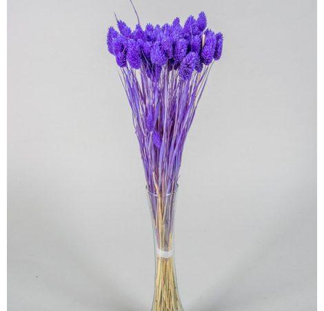 Fénymag szárított lila