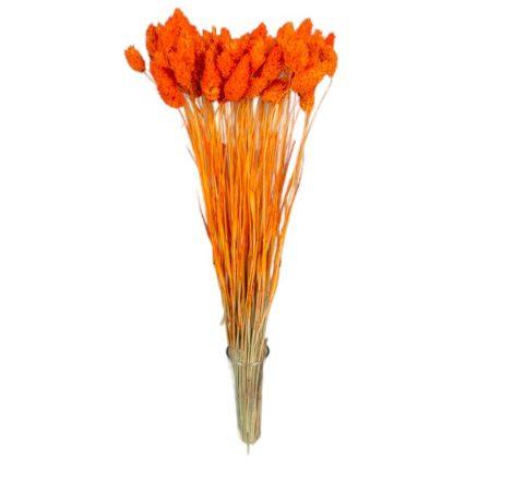 Fénymag szárított narancs