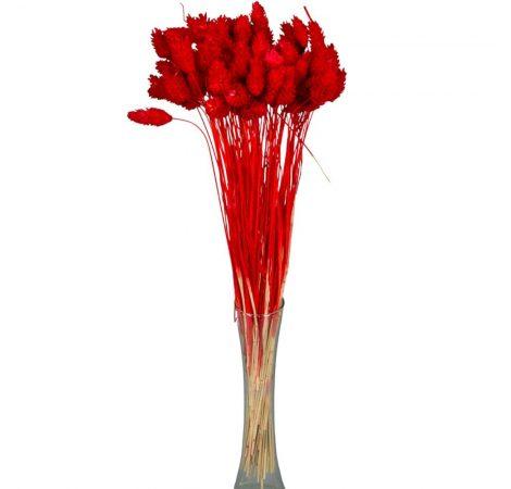 Fénymag szárított piros