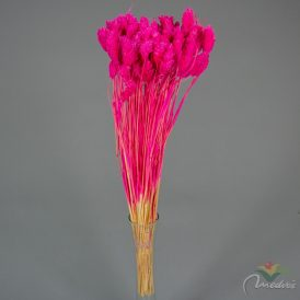 Fénymag szárított rózsaszín